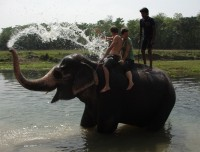 Elephant Bathing in Chitawan